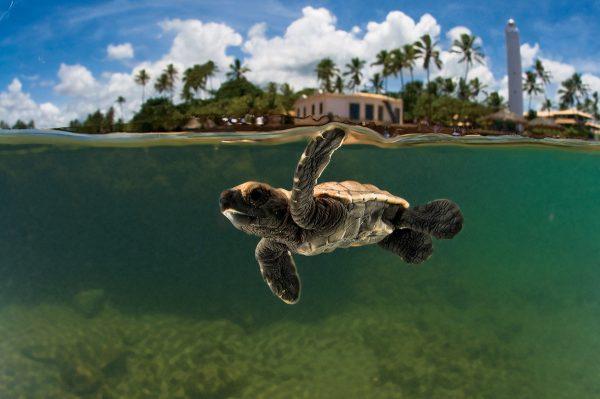 o que fazer na praia do forte tartaruga