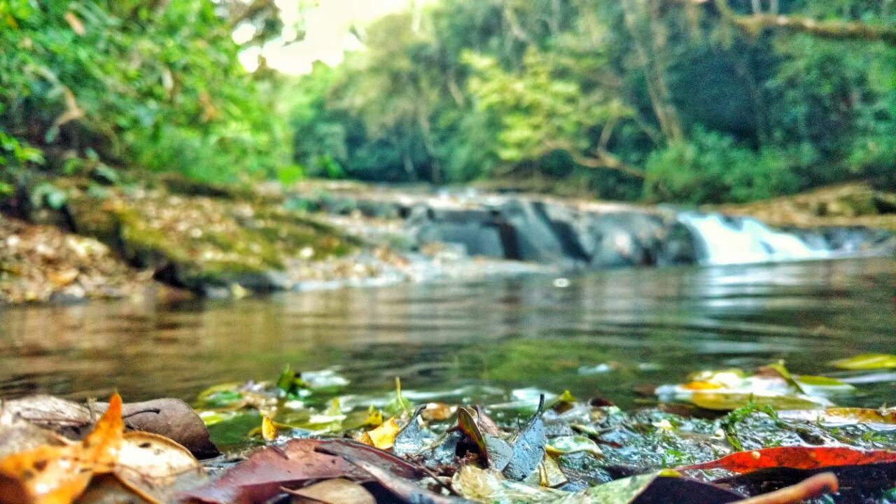 folhas na margem da cachoeira das sete quedas