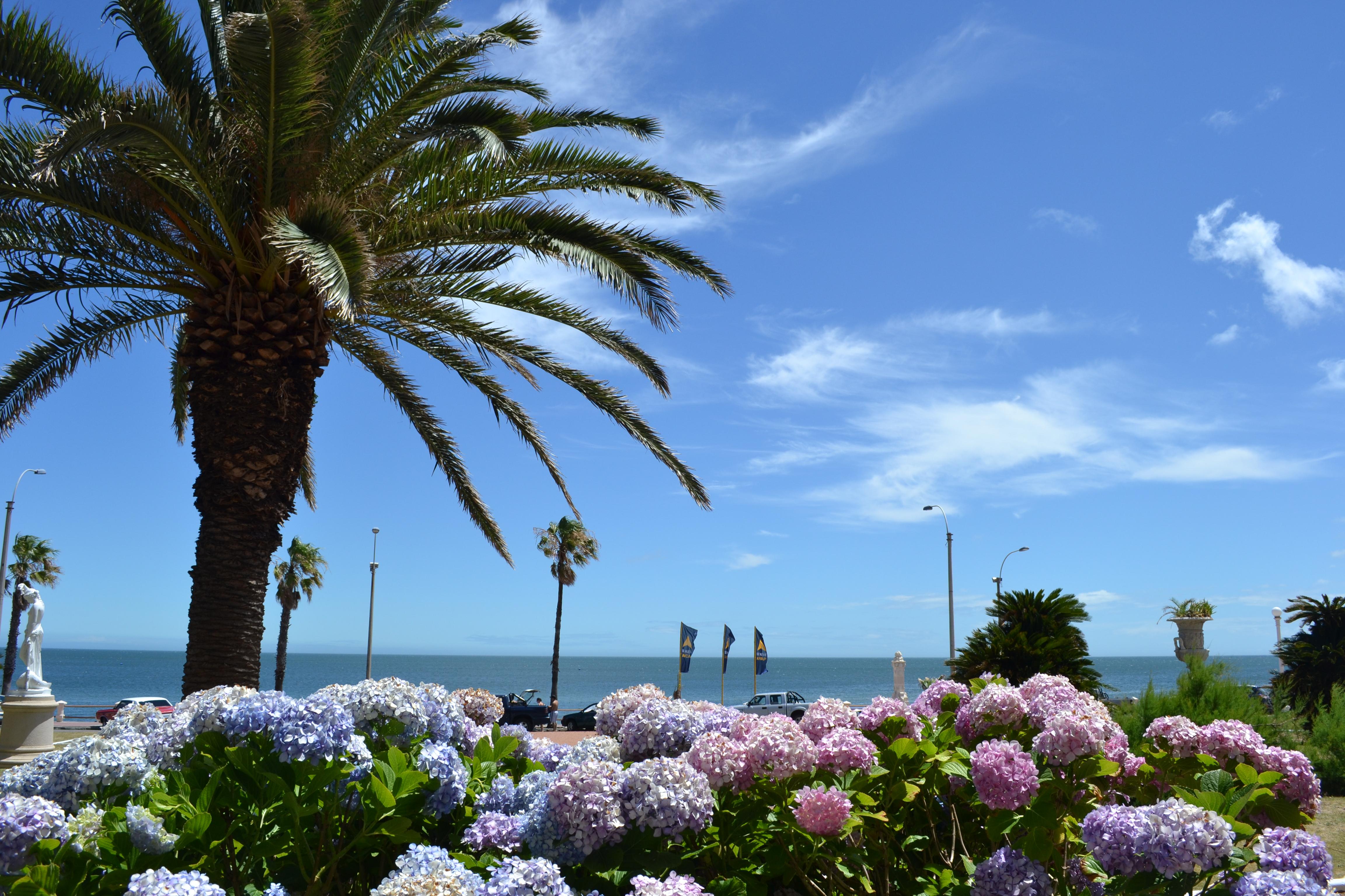 piriápolis uruguai flores em frente ao mar