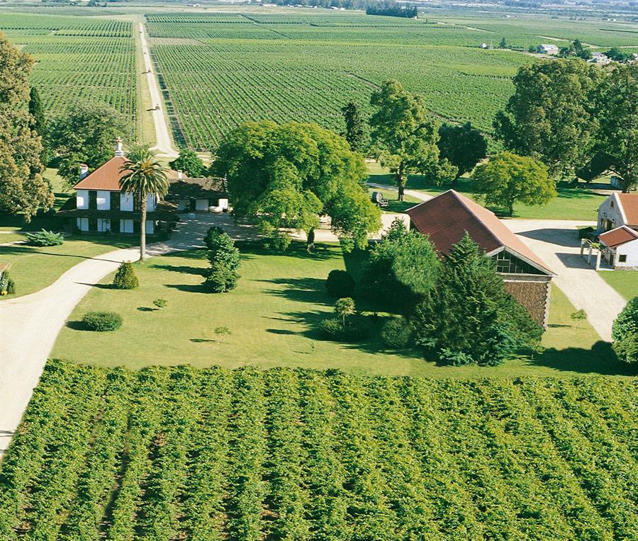vinícolas no Uruguai