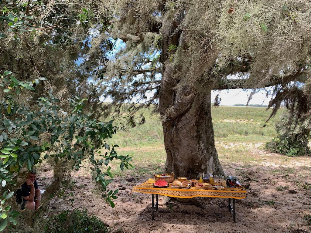 mesa de piquenique embaixo de figueira centenária