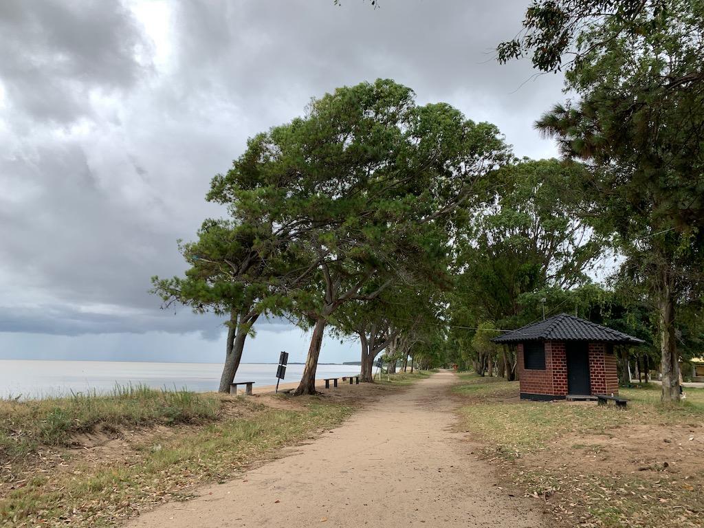 árvores na beira da lagoa