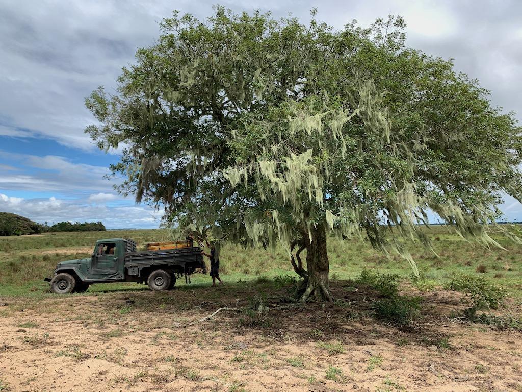 camionete embaixo de árvore em arambaré