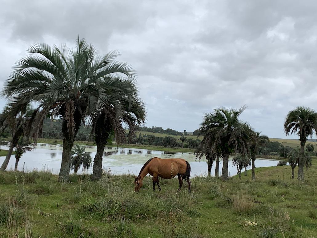 cavalo em frente a lago na fazenda