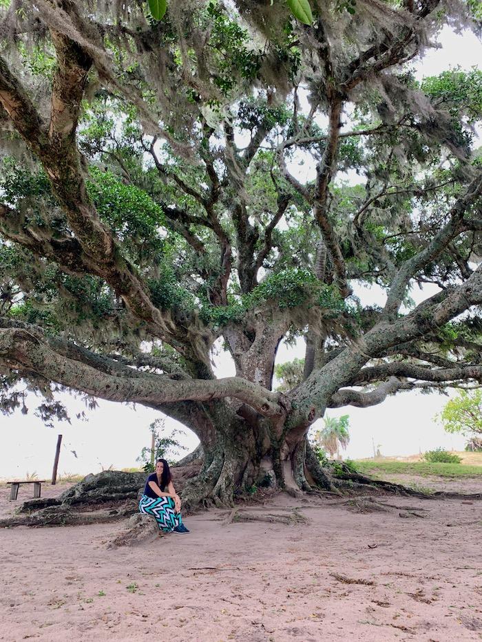 mulher em frente a árvore centenária