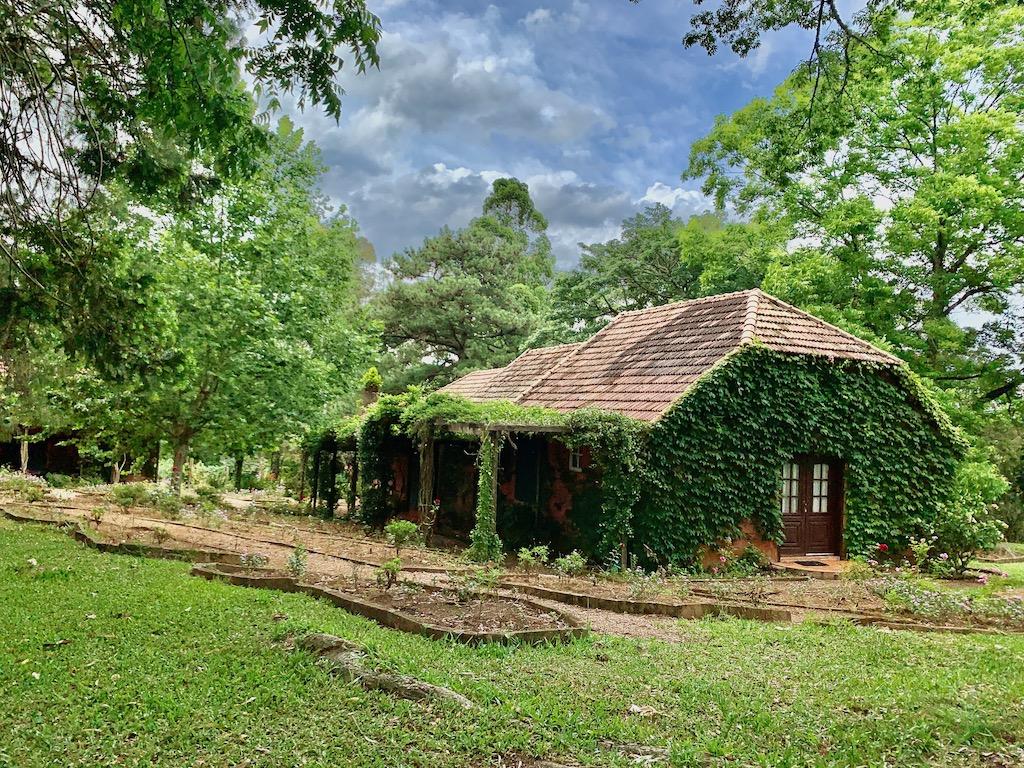 construção coberta por folhas verdes