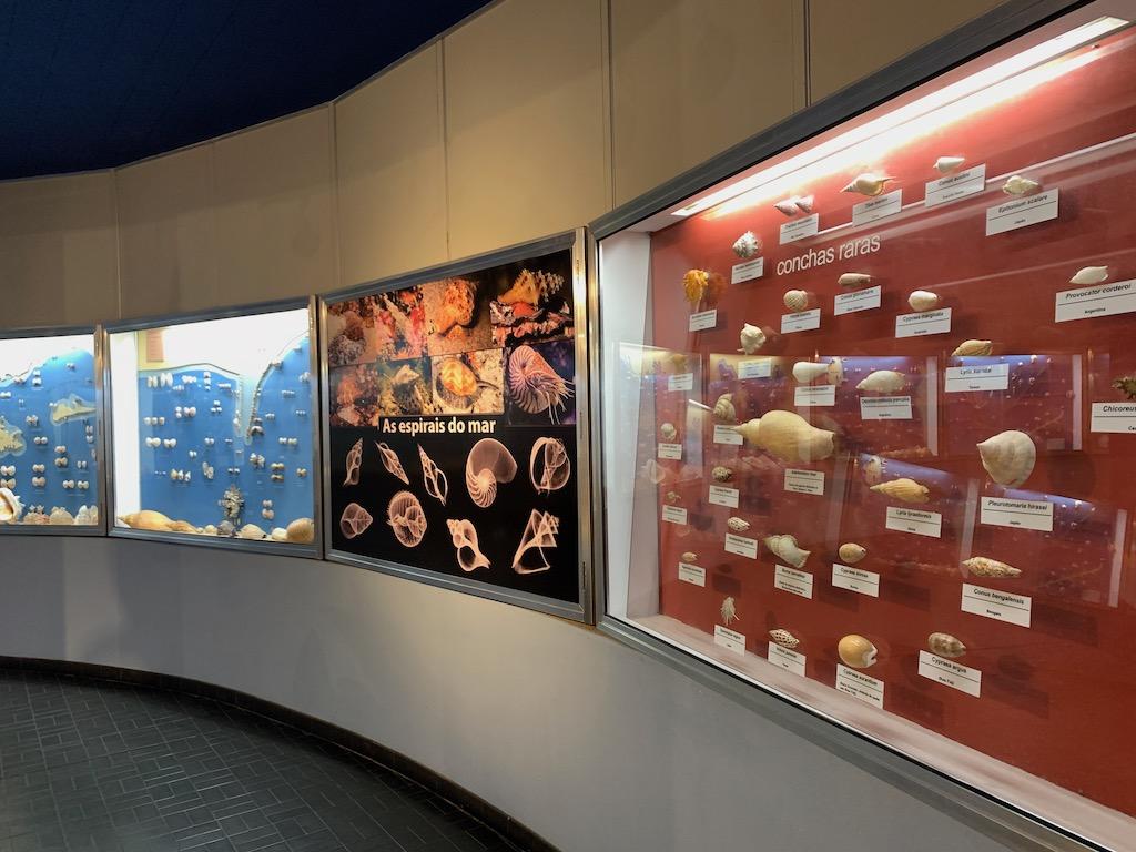 painéis com conchas marinhas em museu