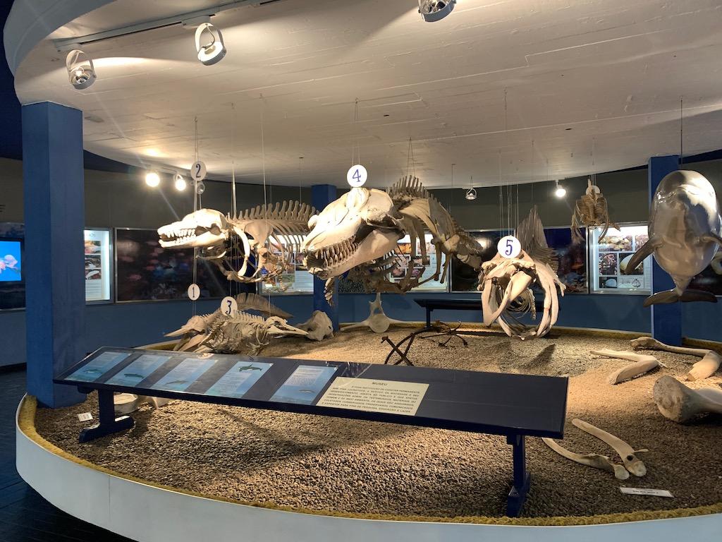 esqueletos de animais marinhos expostos em museu