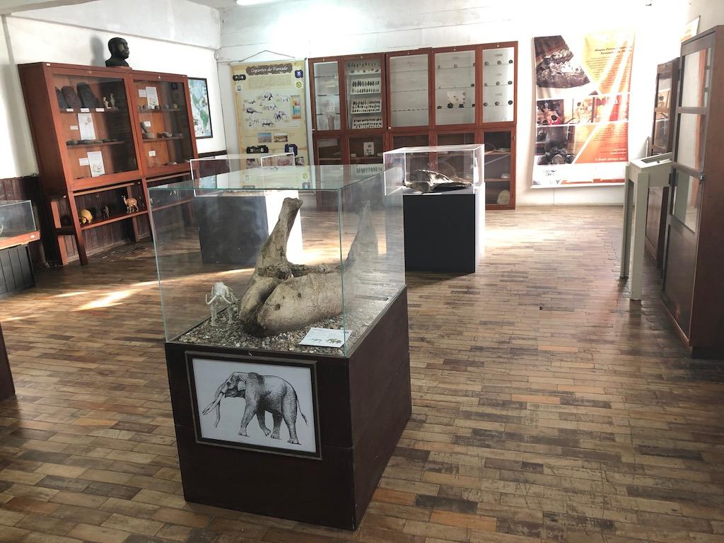 museu com fósseis