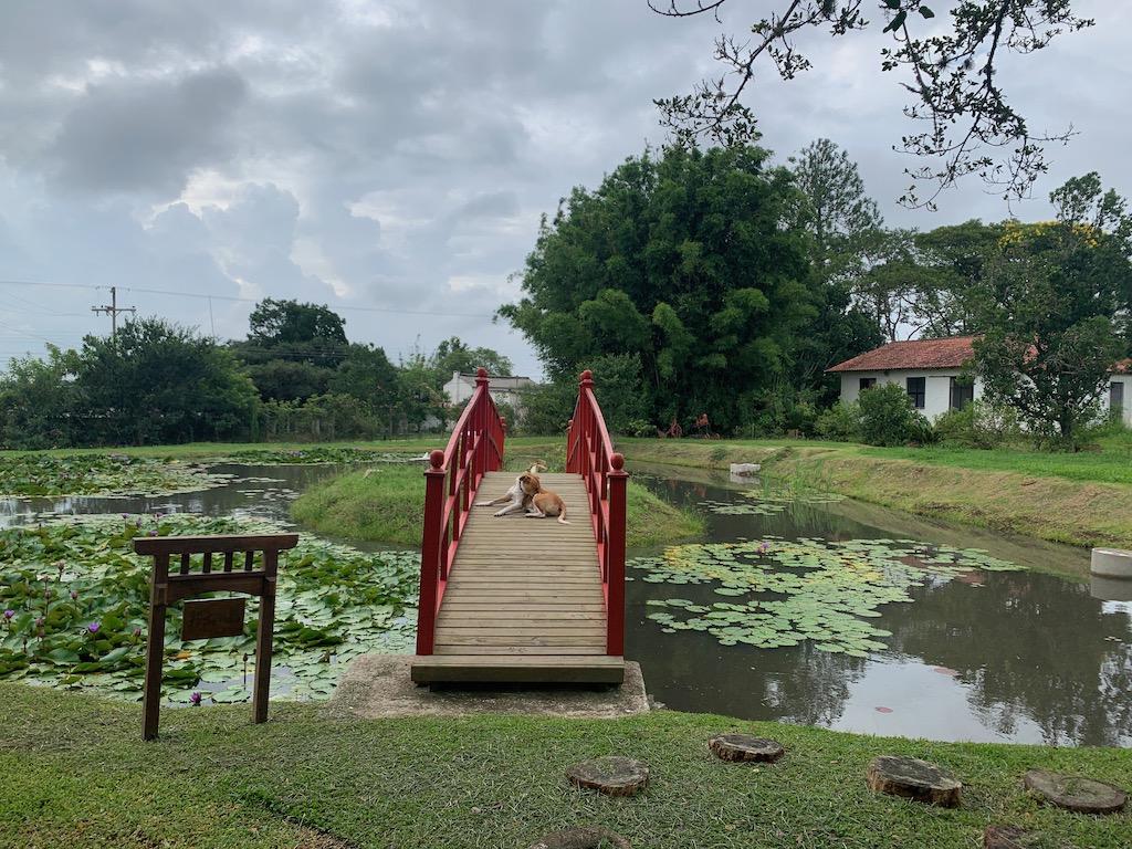 ponte com um laguinho e área verde ao fundo